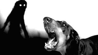 """Tal vez alguna vez has notado que tu perro se comporta de forma extraña ... como si pudiera   ver """"Algo"""" que nosotros no Muchas personas piensan que los perros pueden ver hacia otros planos de existencia ... ¿Que cosas Macabras y Espeluznantes ven?"""