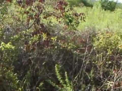 My Movie (21).wmv  8-18-2012–Blackcreeks running