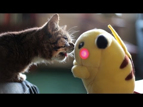 My Favorite YouTube Cat Meets A New Friend, Pikachu!