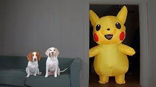 Dogs vs Pokemon Prank: Giant Pikachu Pranks Funny Dogs Maymo & Potpie by Maymo