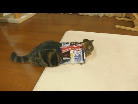 il gatto nella scatola