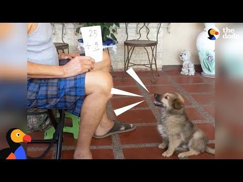 Smart Puppy Dog Does Math | The Dodo