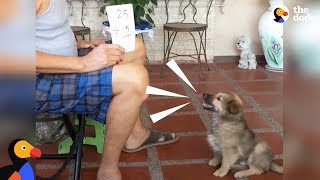 Smart Puppy Dog Does Math | The Dodo by The Dodo