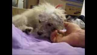 Chase - rescued the day she was scheduled to be euthanized (video By Eldad Hagar).  Please subscribe