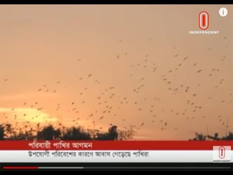 Migratory birds start to arrive (10-12-2018) Courtesy: Independent TV