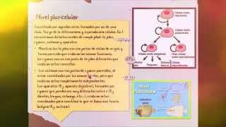"""Universidad Autónoma del Estado de México (UAEM) Planel #13 """"Gabino Barreda"""" N-2 Fecha de entrega: 09Junio2014."""