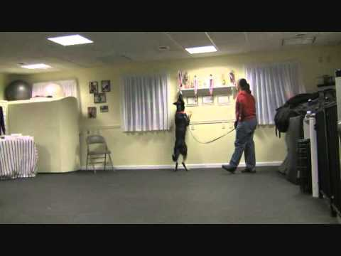Heather and Angus Nosework demo 12-3-2011.wmv