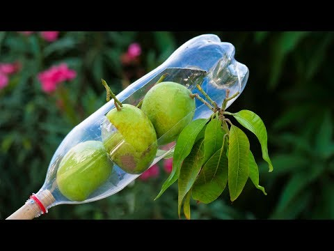 Plastic Bottle Ideas: How to Make Fruit Picker