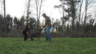 Four year old little girl training a police dog