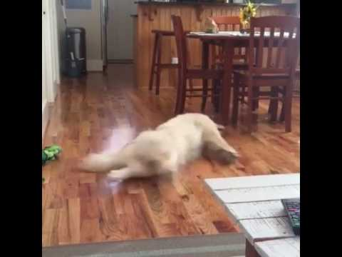 Dog Running In It's Dream While Sleeping....