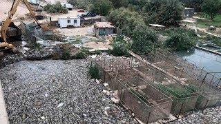 Video Warga Gempar! Jutaan ikan Mas Sungai Eufrat Tiba² Mengambang Secara Misterius! MP3, 3GP, MP4, WEBM, AVI, FLV Januari 2019