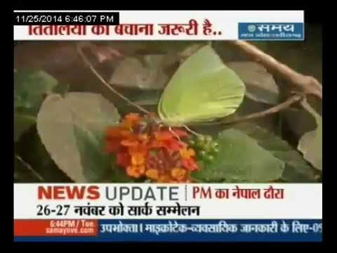 तितलियों को बचाना जरूरी है...