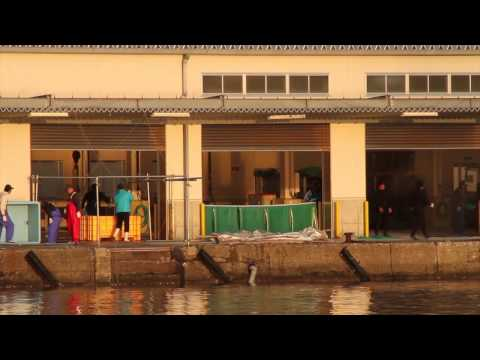 Dismantling of death door at Taiji Butcher house