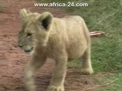 Rhino and Lion Nature Reserve – Africa Travel Channel