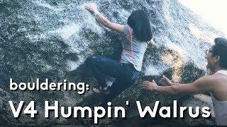 Tramway Bouldering: Humpin' the Walrus | V4 by  rockentry