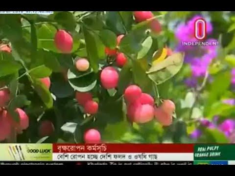 Tree plantation programme (18-07-2018)