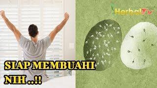 Download Video Waktu & Pertanda MILIK PRIA Lagi Matang (Masa Subur Pria ) | Siap Membuahi Nih !! MP3 3GP MP4
