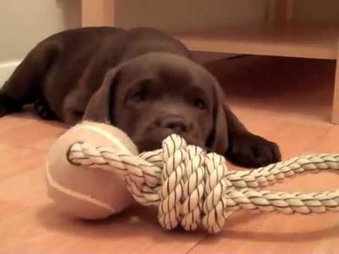 La vida que todo cachorro debería tener