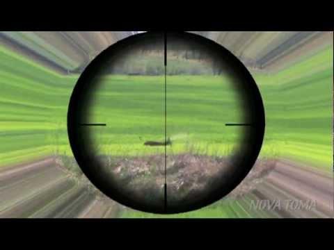 CAZA NOVATOMA TRAILER, (Hunting Vídeo) Trailer Corzos en el Punto de Mira