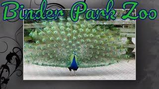 Battle Creek (MI) United States  city pictures gallery : Animals in Binder Park Zoo, Battle Creek, Michigan United States
