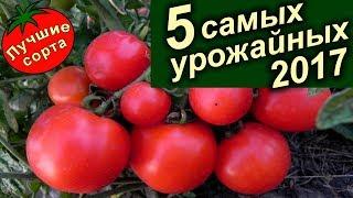 Самые урожайные томаты 2017 года (лучшие сорта томатов).