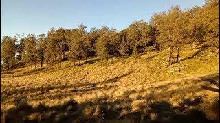 Video [Cerita Mistis] Pendakian Gunung Lawu Via Candi Cetho | Gunung yang menyimpan sejuta misteri MP3, 3GP, MP4, WEBM, AVI, FLV Juli 2019