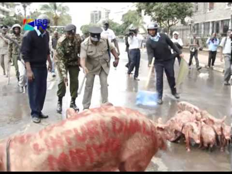 Occupy - The Kenya Society for the Protection and Care of Animals or KSPCA intends to take legal action against Boniface Mwangi, the organiser of the Occupy Parliamen...