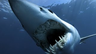 SharkWeek  Starts Sun Jul 23 Sharks aren't angry, they're just misunderstood! Full Episodes Streaming FREE on Discovery GO: https://www.discoverygo.com/ ...