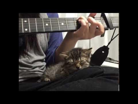 gattina-orfana-salvata-trova-conforto-al-suono-della-chitarra