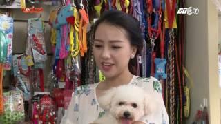 Kỳ 2: Ca sĩ Băng Di cùng giống chó Poodle dễ thương - Thú Cưng TV
