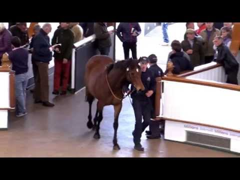 Tattersalls Guineas Breeze Up & HIT Sale Video Review 2015