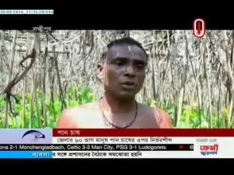Cultivation of betel (30-09-2016)