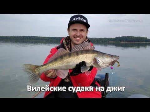 как ловить судака на вилейке