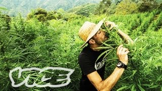 Kings of Cannabis: Part 3/3 (Documentary)