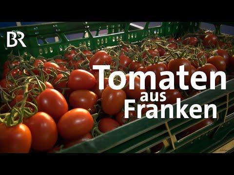 Tomaten im Winter: Aus Gewächshäusern in Franken | Un ...