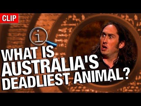 QI   What Is Australia's Deadliest Animal?