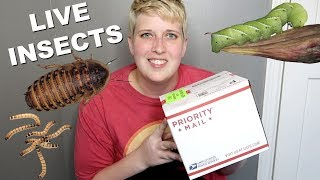 UNBOXING LIVE FEEDER INSECTS by Pickles12807