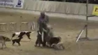 Cães adestrados