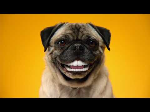 Doggy Dentures - PEDIGREE® DENTASTIX® Commercial