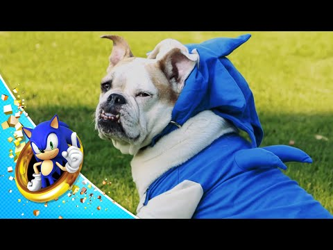 Sonic the Hedgedog Makes Up for Slow Speed With Total Cuteness