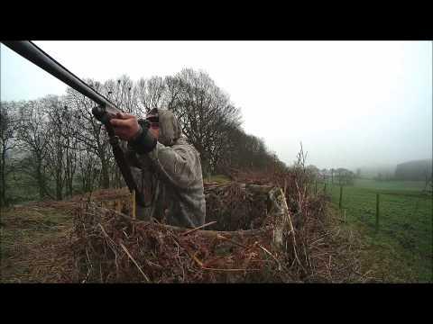 Shooting Corvids