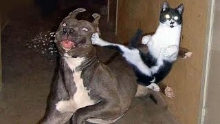 Video Awesome animal funnies and cuties - Dogs, cats & much more - Watch and enjoy MP3, 3GP, MP4, WEBM, AVI, FLV Oktober 2017