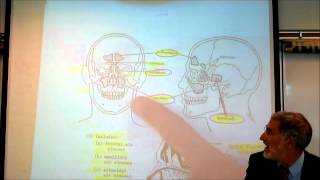 ANATOMY; RESPIRATORY SYSTEM By Professor Fink.wmv