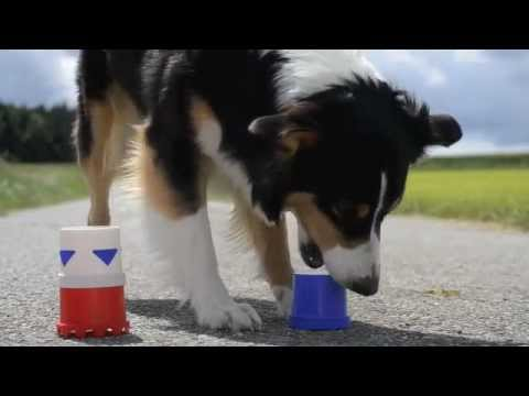 Amazing Dog Tricks 2 – AMY (Australian Shepherd)