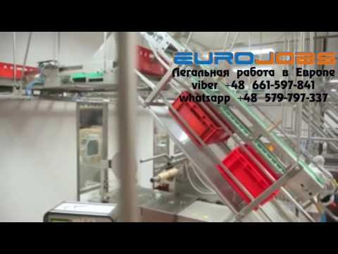 Работа в Польше на мясокомбинате EuroJobs