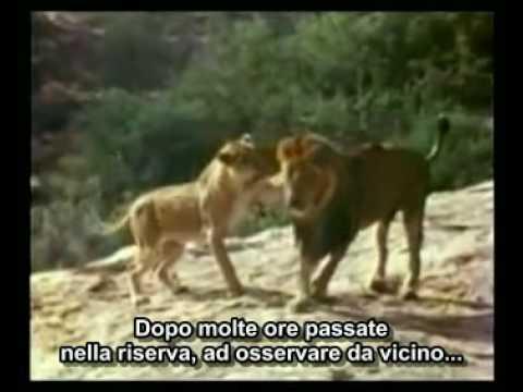 """il leone christian abbraccia i padroni dopo anni: """"favola"""" commovente!"""