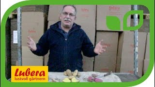 Kartoffeln - interessante Sorten und Züchtung bei Lubera
