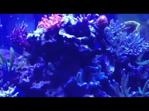 Portfolio Video 14