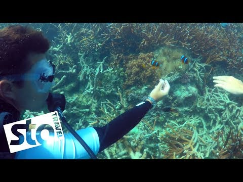Great Barrier Reef Conservation with Jacob Dixon | STA Travel (видео)