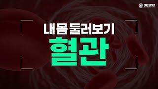 혈관 미리보기